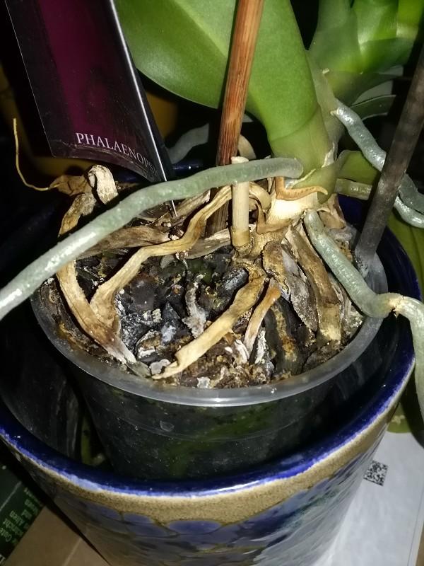 1. Orchidee Bild1.jpg