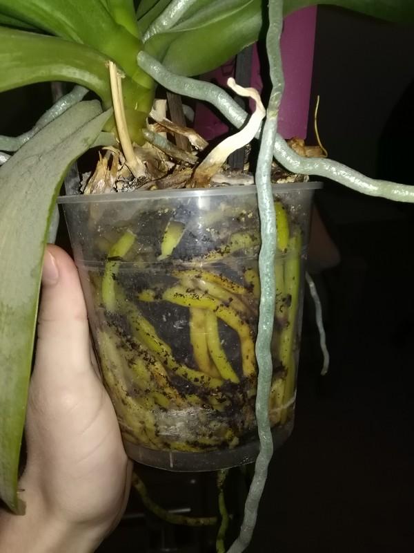 1. Orchidee Bild5.jpg