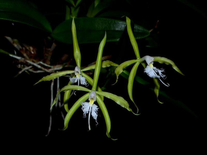 was bl ht im oktober 2016 naturformen seite 2 orchideenforum. Black Bedroom Furniture Sets. Home Design Ideas