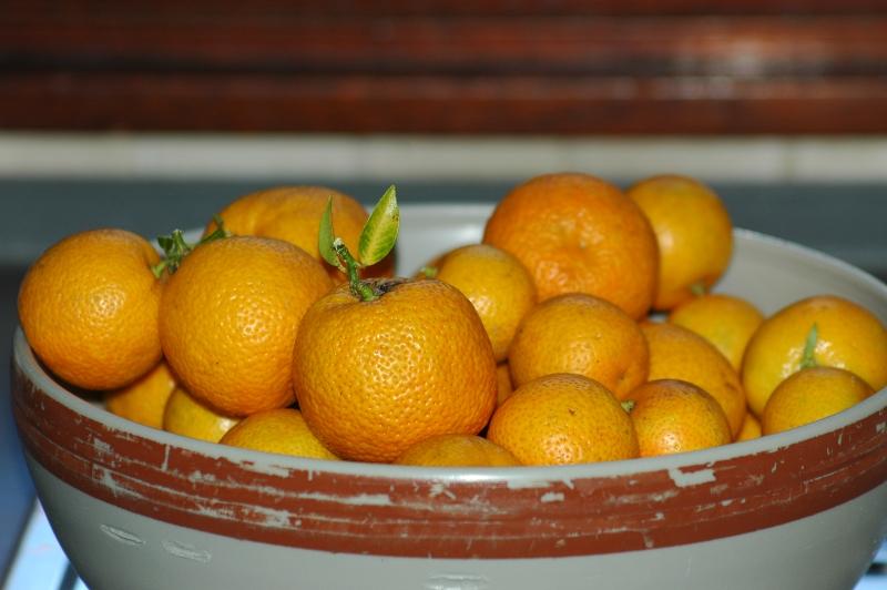 2017-10-11 Orangenernte          2 - Kopie.JPG