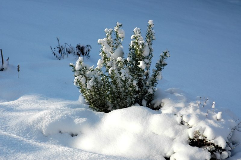 2017-12-29 Winter 1 - Kopie.JPG