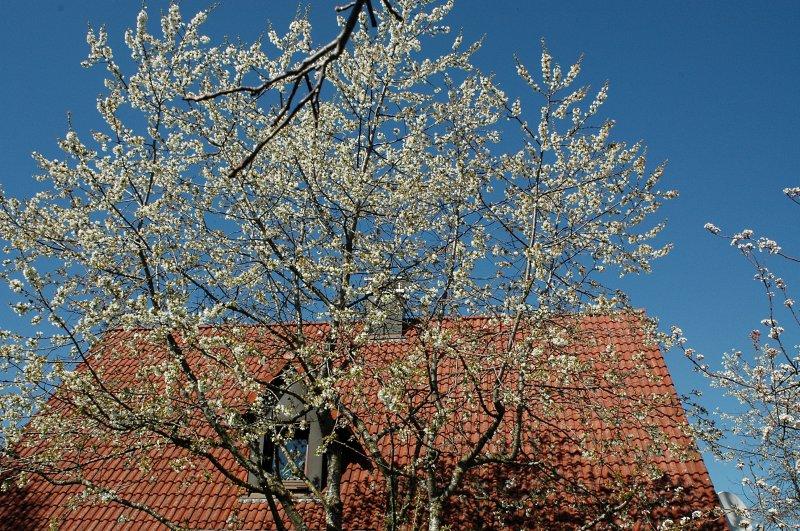 2019-04-19 Kirschblüten 8.JPG