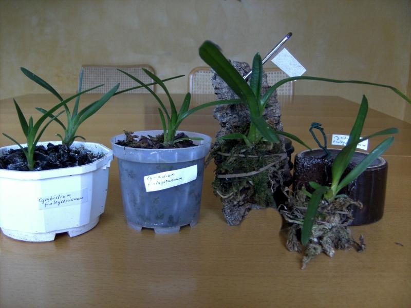 21.09.2008Jungpflanzen 006 - Kopie.jpg