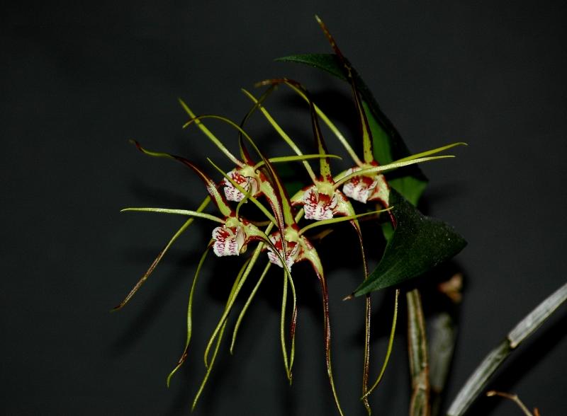 was bl ht im november 2016 naturformen seite 10 orchideenforum. Black Bedroom Furniture Sets. Home Design Ideas