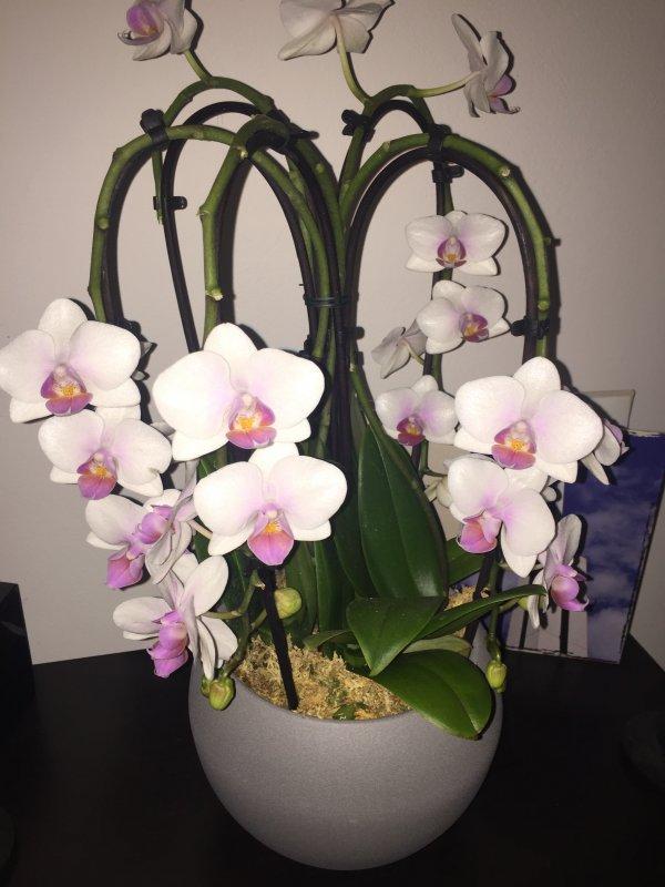 Pflege Von Orchideen In Einer Schale Orchideenforum