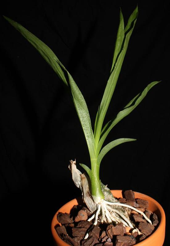 M Pflanze.jpg