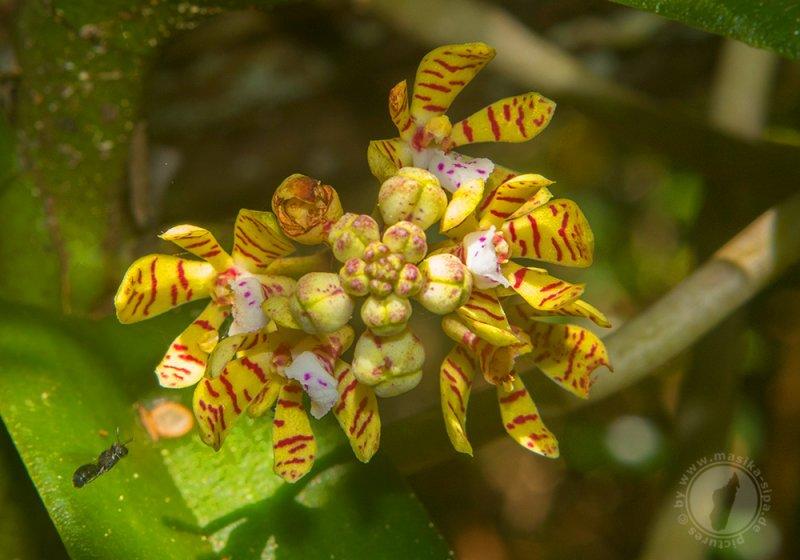 orchidee_12_ankarafantsika.jpg