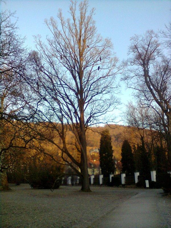 Pfauen im Baum.jpg